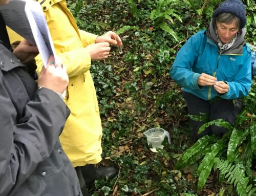 Citizen Scientists get active on the Culm
