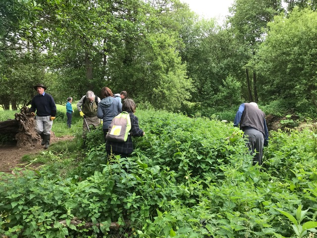 Himalayan Balsam Action Group training day