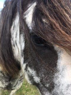 Close up shot of horse head & eye